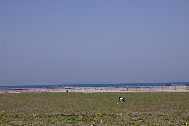 青い海と空を一足早く満喫する「シーサイドピクニック」